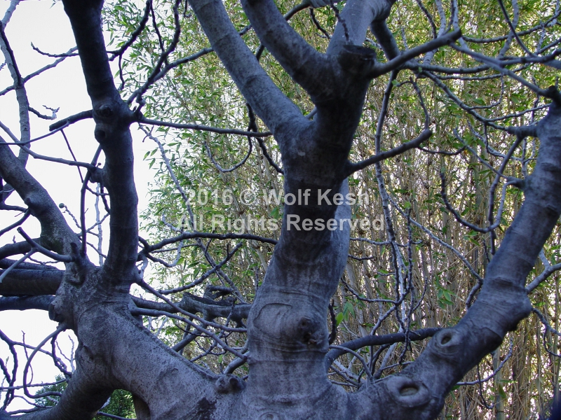 Magical Old Tree Nature Art Photo By Wolf Kesh