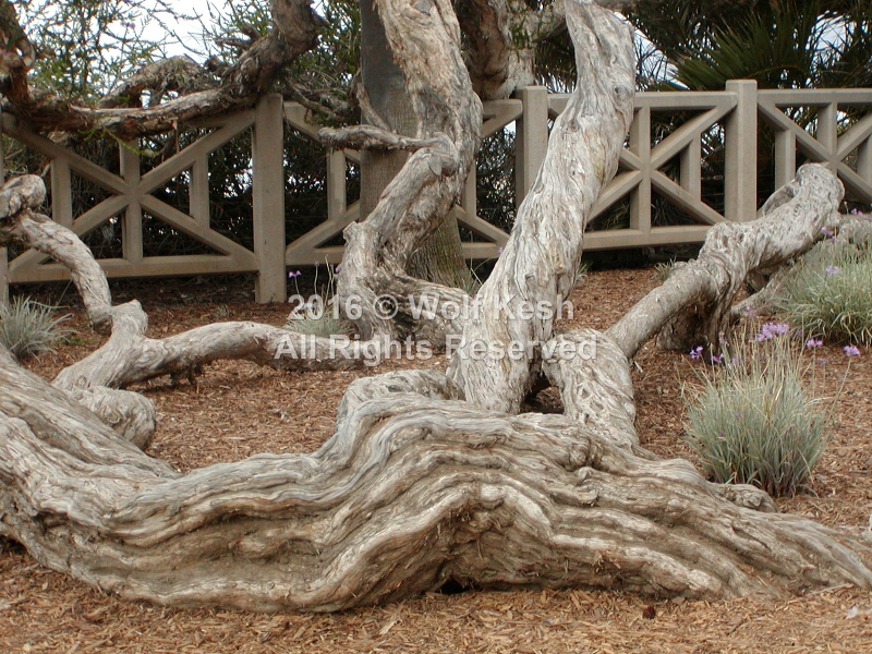 Roots Nature Art Photo By Wolf Kesh