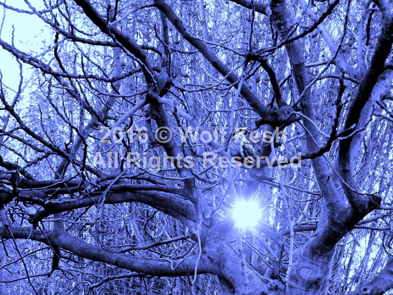 Winter Dream Digital Art By Wolf Kesh