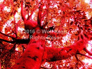 Autumn Fire Digital Art by Wolf Kesh