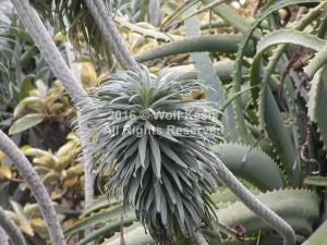 Cactus Jungle Nature Art Photo By Wolf Kesh