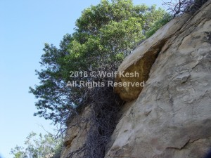 From A Rock Nature Art Photo By Wolf Kesh