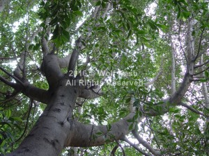 Sky Lifter Tree Nature Art Photo By Wolf Kesh